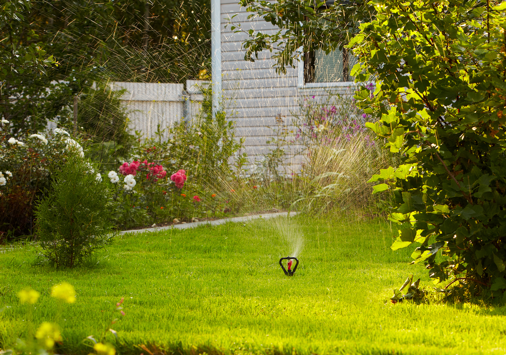 summer lawn care and watering guide