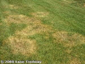 Brown Patch Disease