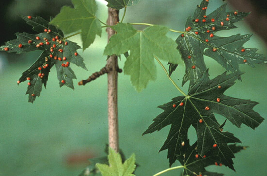 knoxville trees and shrubs