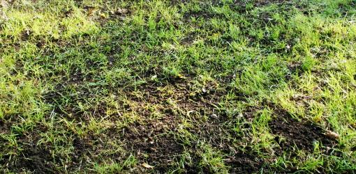 top-dressing-improve-soil-lawn-3